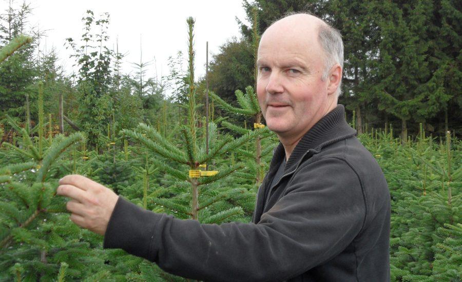 Weihnachtsbaumzüchter Burkhard Grobbel bei der Pflege der Weihnachtsbäume aus dem Sauerland